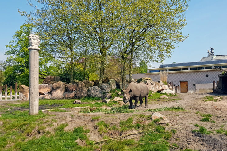 Pachyderms exhibit Blijdorp_32